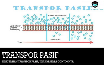 transpor-pasif